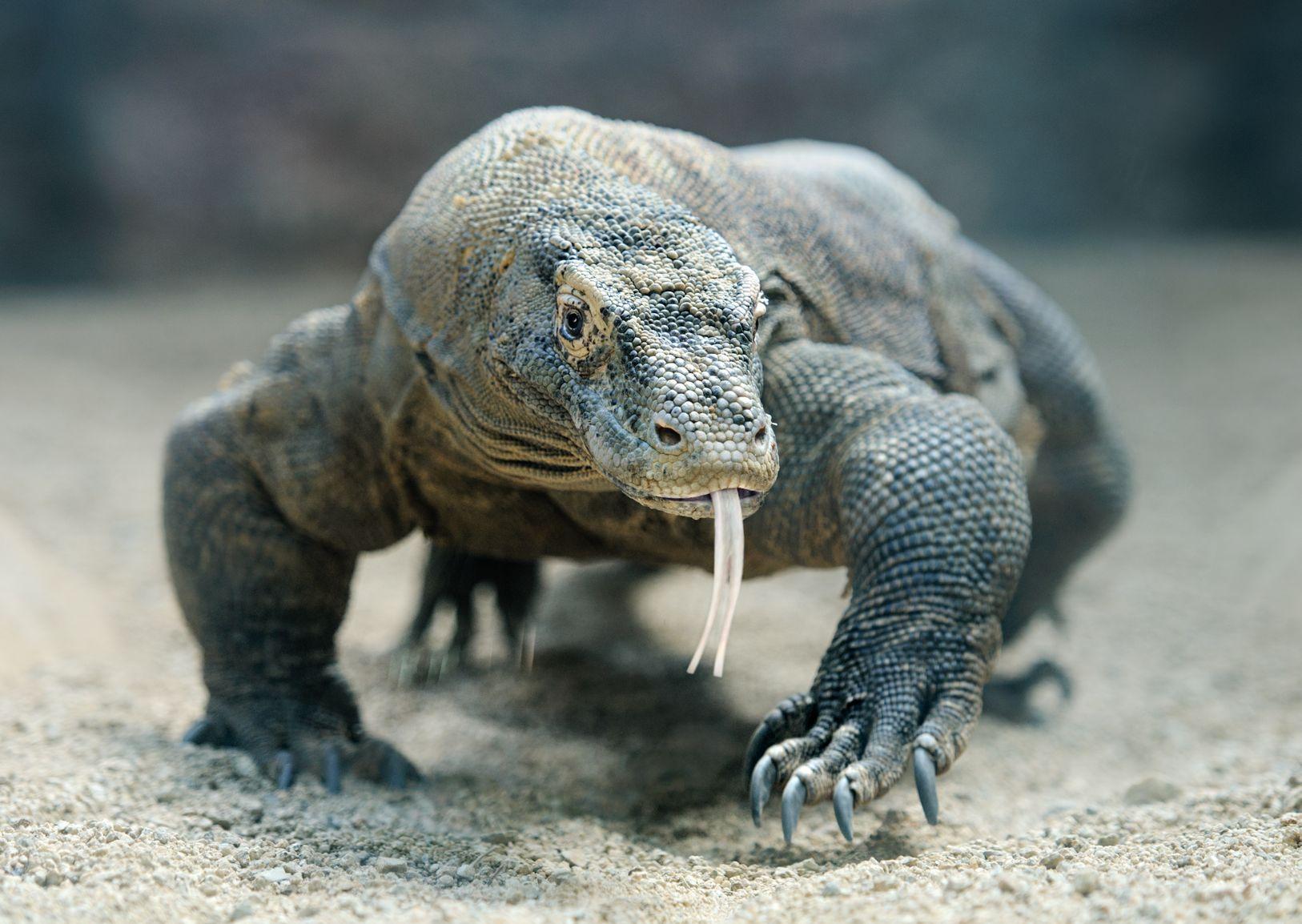 La tortue est bel et bien un reptile !